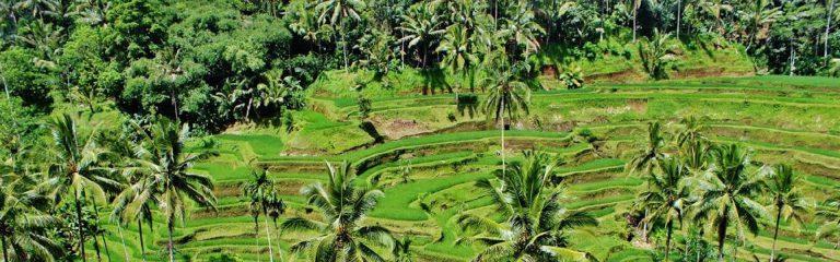 Indonesische Rendang